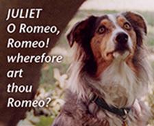 Shakespeare by the Flea